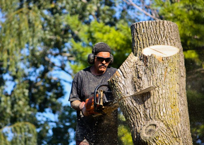 large tree removal in sarasota county